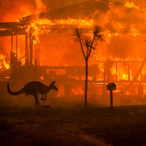 More than 30% of animals' habitat has been destroyed along with more than 3,000 homes, and a death toll exceeding 1 billion animals continues to rise. Photo Courtesy of Google Images.