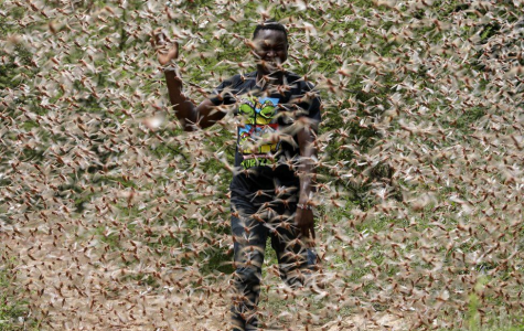 Locusts in Africa: The Other Plague